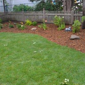 Backyard Resod, Landscaping and Gardens